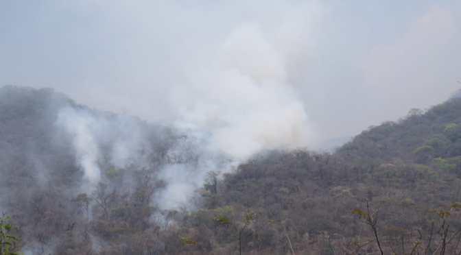 Diputado pedirá informe al Gobierno sobre acciones asumidas para sofocar incendios