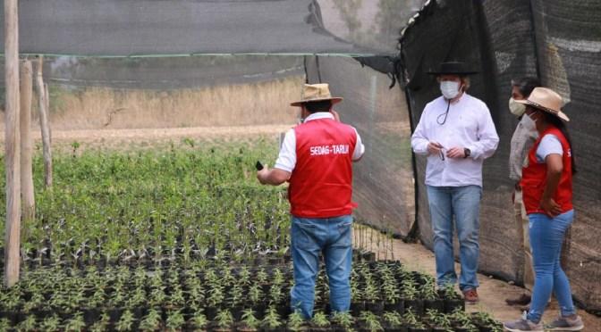 Sedag desarrolla cinco cultivos in vitro en Tarija para mejorar produción agrícola