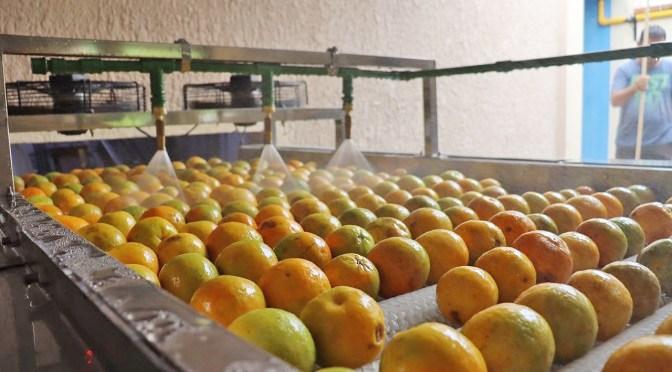 Empresarios de Israel interesados en invertir en la parte citrícola