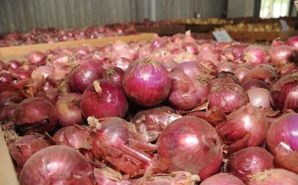 Señalan que continúa ingresando cebolla peruana a mercados de La Paz y Santa Cruz