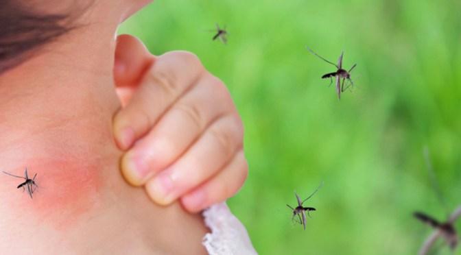 Ceretrop Bermejo procesa pruebas de dengue de otros municipios