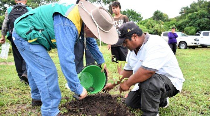 Alcaldía y SERNAP inician campaña de reforestación en zonas dañadas por incendios