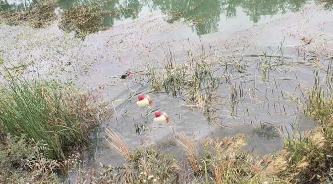 En Colón Sud: Joven se mete en estado de ebriedad a un atajado de agua y se ahoga