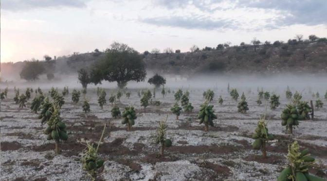 Cochabamba: Lluvias provocan daños en cultivos y desborde de ríos