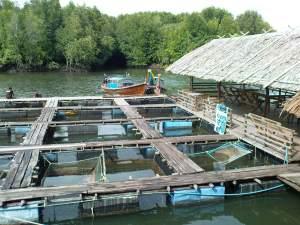 Koh Klang fish farm