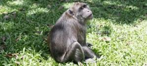 monkey of somdet phra srinakarindra park