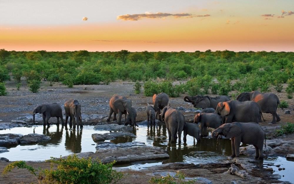 Nacen elefantes sin colmillos en África (3/5)