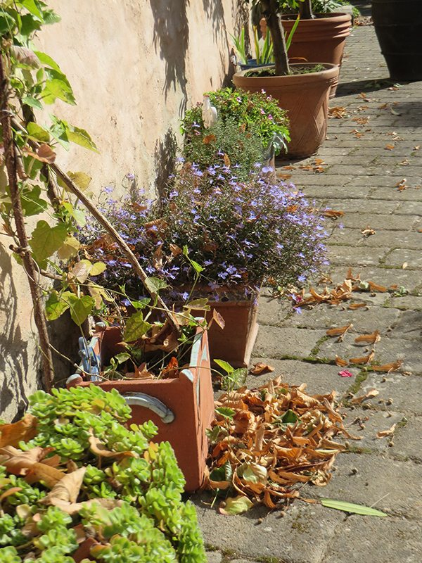 Hier steht ein Foto mit dem Titel: Sonniges Herbstwochenende in St. Johannisberg (Foto: Hans-Joachim Schneider)