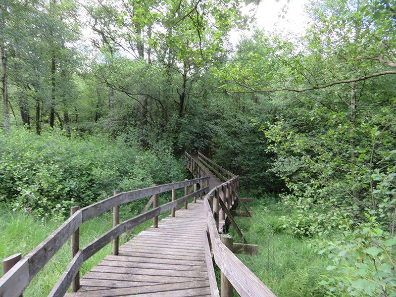 Auf Holzstegen geht es durch den Ortelsbruch (Foto: Hans-Joachim Schneider)