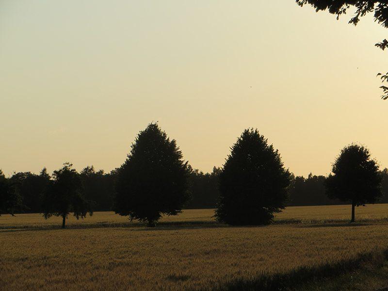 Kurz vor Sonnenaufgang wirkt die Landschaft auf der Glessener Höhe wie ein Scherenschnitt
