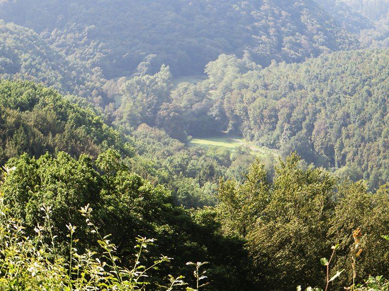 Weites grünes Baybachtal, hier kann das Auge ruhen und die Seele Frieden finden (Foto: Hans-Joachim Schneider)