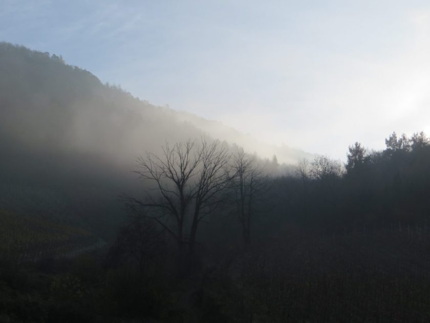 Hier steht ein Bild mit dem Titel: Diese Aufnahme entstand im November. Nebel verhüllt noch teilweise den Wald (Foto: Hans-Joachim Schneider)