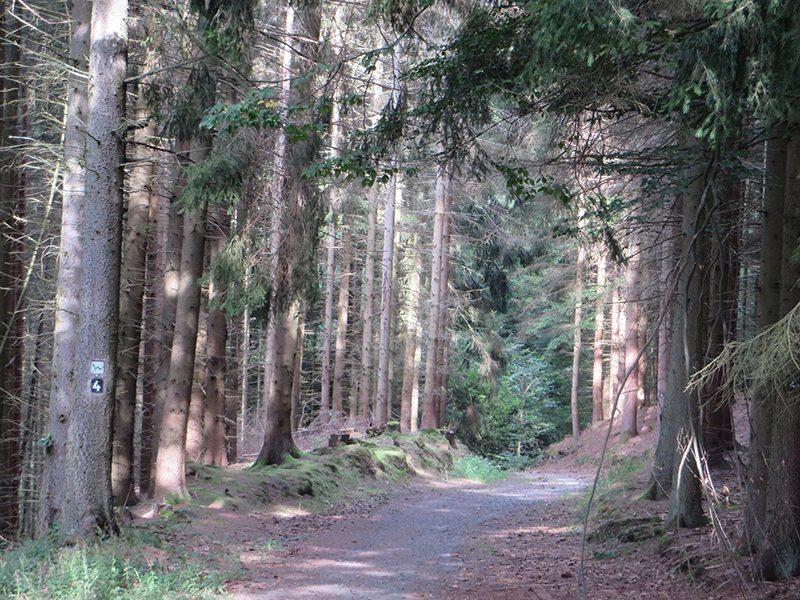 Hier steht ein Foto mit dem Titel: Auch gerade keiner unterwegs auf dem Westerwaldsteig (Foto: Hans-Joachim Schneider)