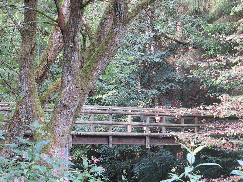 Hier steht ein Foto mit dem Titel: Westerwaldsteig: Noch ne Brücke über die Nister (Foto: Hans-Joachim Schneider)