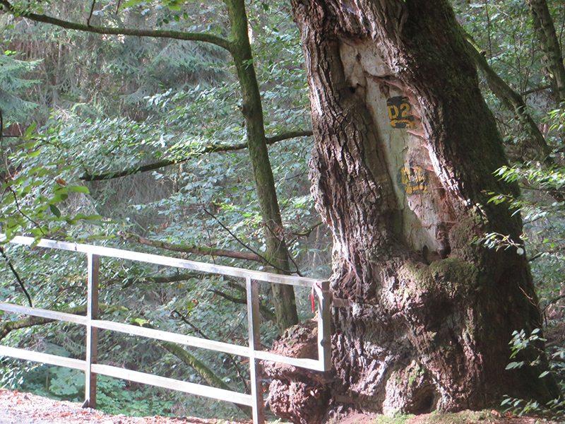 Hier steht ein Bild mit dem Titel: Fast so alt wie mein Knie, der alte Brückenwächter (Foto: Hans-Joachim Schneider)