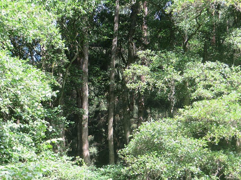 Hier steht ein Bidl mit dem Titel: Lange, lange führt der Weg durch die Wälder im Tal