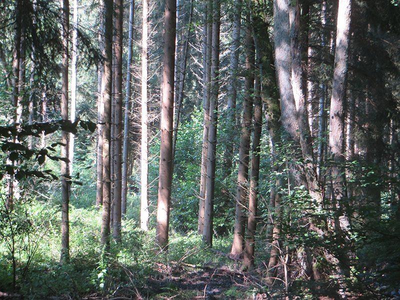 Einen ganzen Tag im Wald – eine Wohltat für alle Sinne und die Nerven (Foto: Hans-Joachim Schneider)