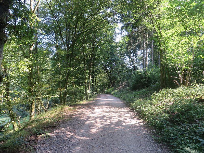 Wer an der Daubisberger Mühle auf die andere Seite des Ehrbaches wechselt, läuft auf diesem Weg Richtung Ehrbachklamm (Foto: Hans-Joachim Schneider)