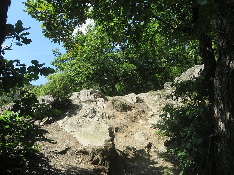 Niedrigwüchsige Eichen auf schiefrigem Untergrund, wie ich diese Landschaft liebe (Foto: Hans-Joachim Schneider)