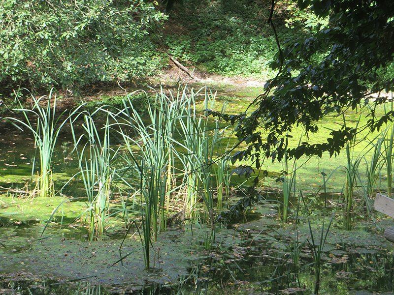 Kleine Tümpel im Grün des Waldes: Ach ja, die Fischteiche, sie befanden sich etwa auf der Höhe der kleinen Kapelle