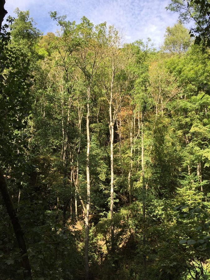 Nach oben, nach oben: Die Bäume scheinen keine andere Richtung zu kennen