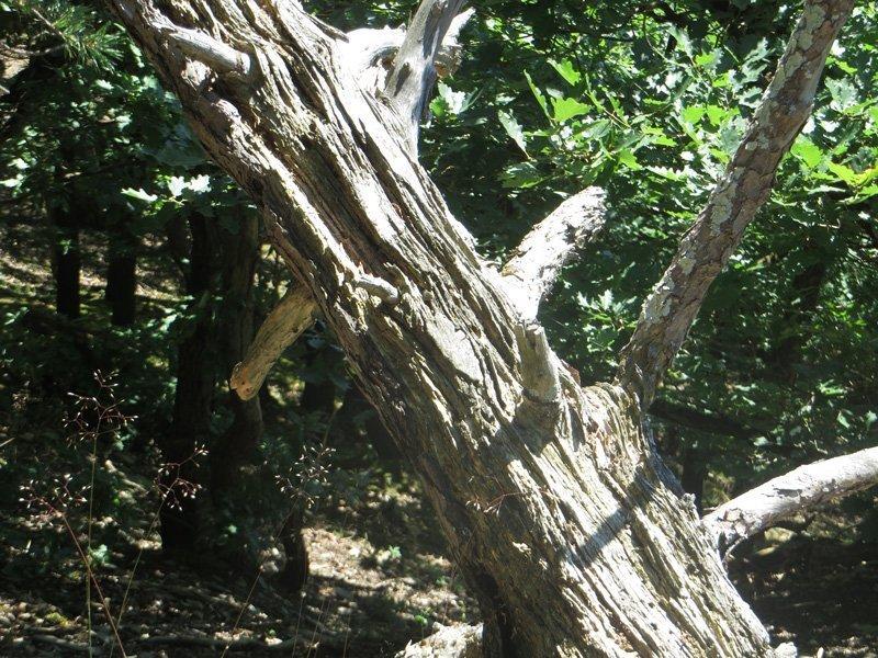 Sonnengebleichtes totes Holz liegt am Wegrand