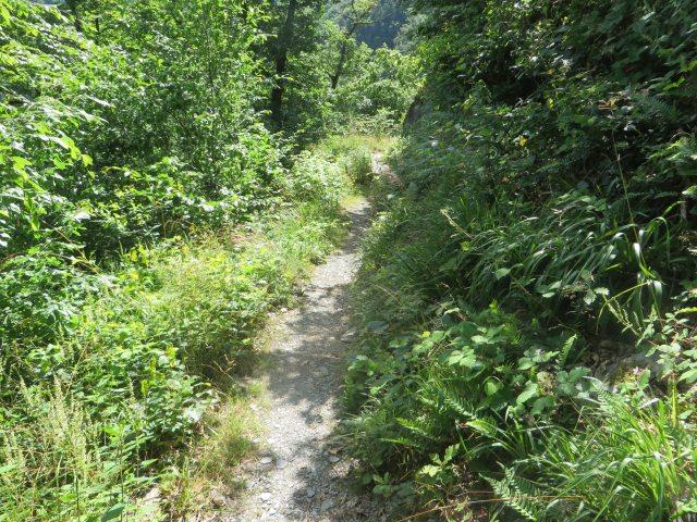 Ein schmaler steiniger Pfad zwischen grünen Büschen: Für diesen Abschnitt der neuen AhrSteig-Etappe gilt: Ein Steig ist ein Steig ist ein Steig ... (Foto: Hans-Joachim Schneider)