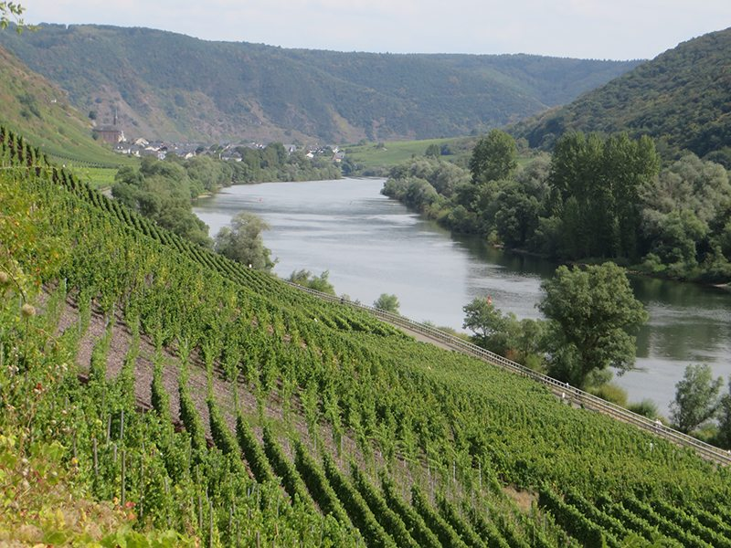 Mosel, Moselsteig, grün, Wein, Weinbau, Wingerte, Moselschleife