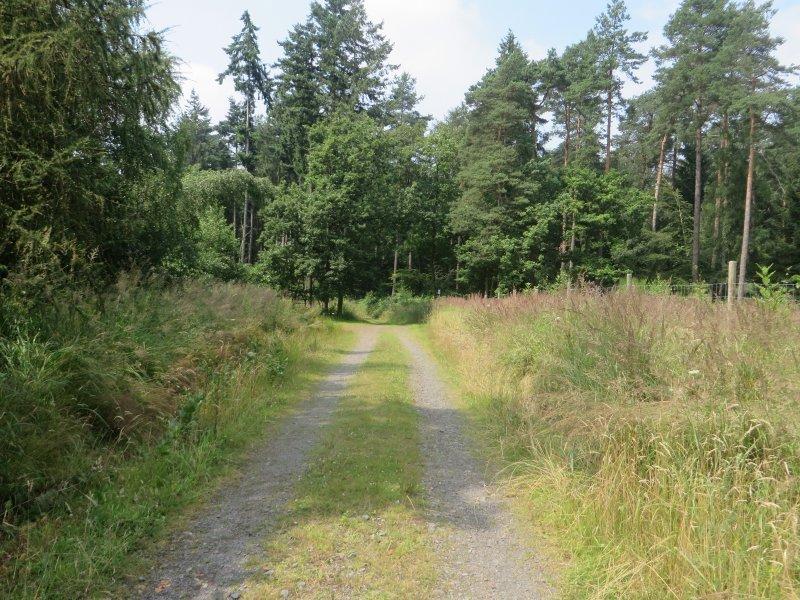 Weg, Waldweg,Lichtung, Wald, Rheinburgenweg: Hier haben wir den höchsten Punkt der Wanderung gerade überschritten