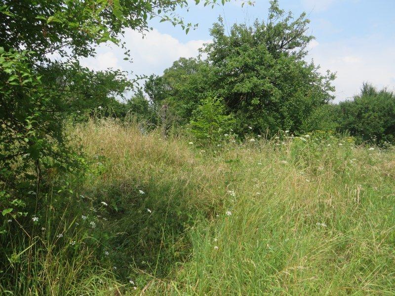 Gras, Grün, Üppig, Wiese, Dschungel, Abenteuer, Rheinburgenweg