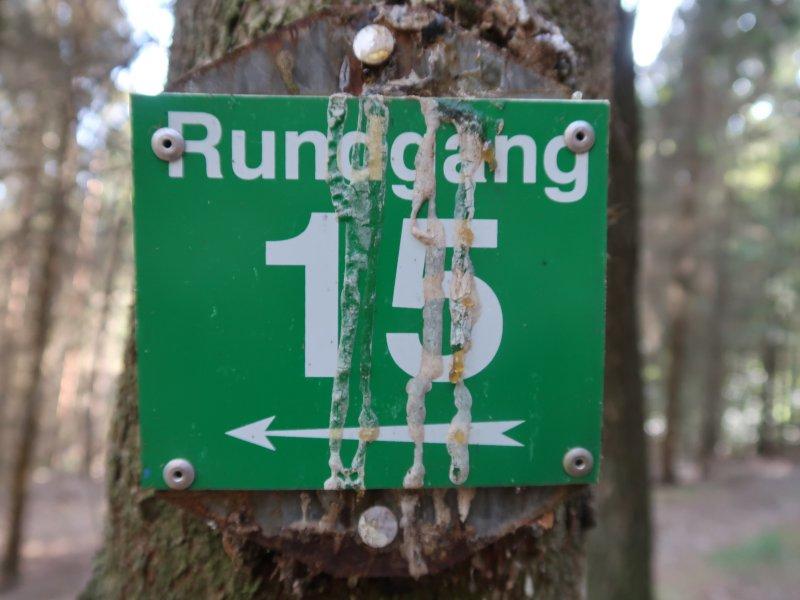 Baum, Schild, Markierung, grün, 15, Rundgang, ahrtal erleben