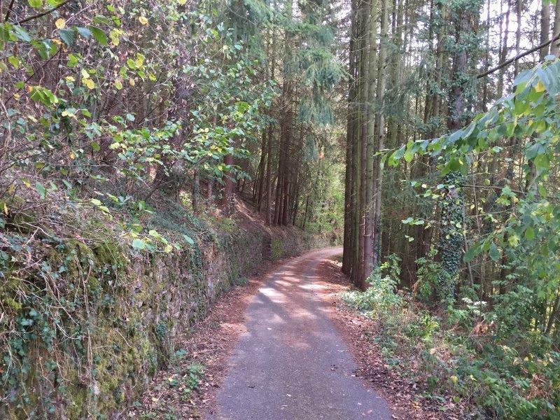 Auch das ist Ahrtal erleben: Im Wald hält mich mein Unbewusstes gefangen.