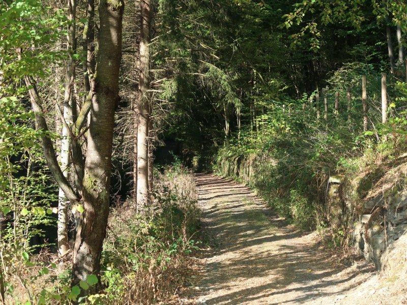 Im Licht der frühen Sonne geht es durch den Wald, rechts säumen alte Weinbergsmauern meinen Weg