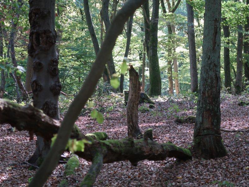 Wald, Bäime, herbstlich fahles Licht