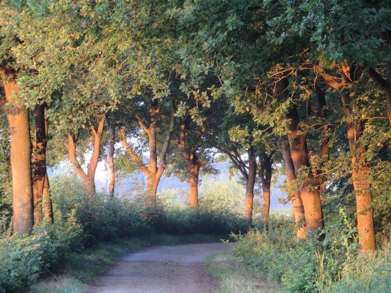 Gegen Ende der Frühaufsteherwanderung verzaubert das Licht der gerade aufgegangenen Sonne die Bäume am Wegrand (Foto: Hans-Joachim Schneider)