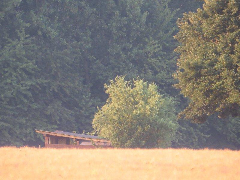 Der Weg führt gegen Ende an Ackerland vorbei. Getreide wiegt sich im Licht der aufgehenden Sonne (Foto: Hans-Joachim Schneider)