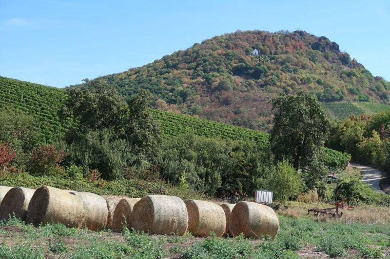 Strohballen, dahinter Weinberge und im Hintergrund die Landskrone, ganz winzig die Maria-Hilf-Kapelle