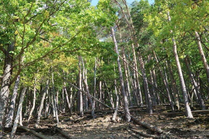 Was für ein Wald, genau richtig, um Abenteuer im Ahrtal zu erleben.