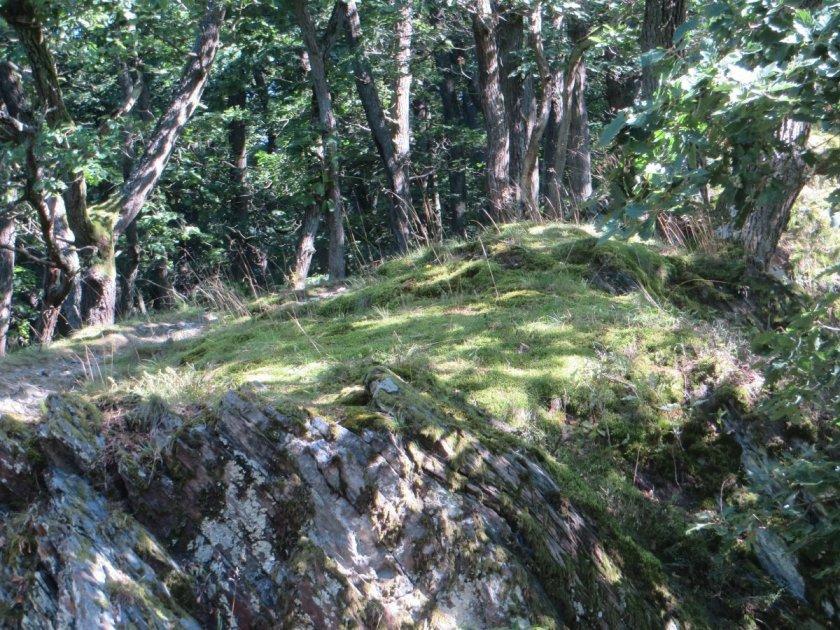 Verspielt tanz das Sonnenlicht über den Waldboden