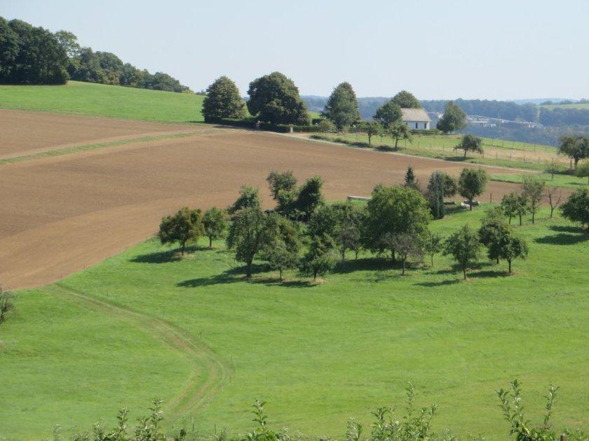 Grüne Wiesen, vereinzelt verstreute Bäume, ein Acker und ein weiter Horizont oberhalb von Misselberg