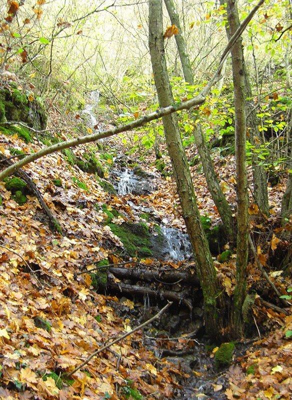 Ein Rinnsal in einem kleinen Geländeeinschnitt, bunte Buchenblätter, es ist November