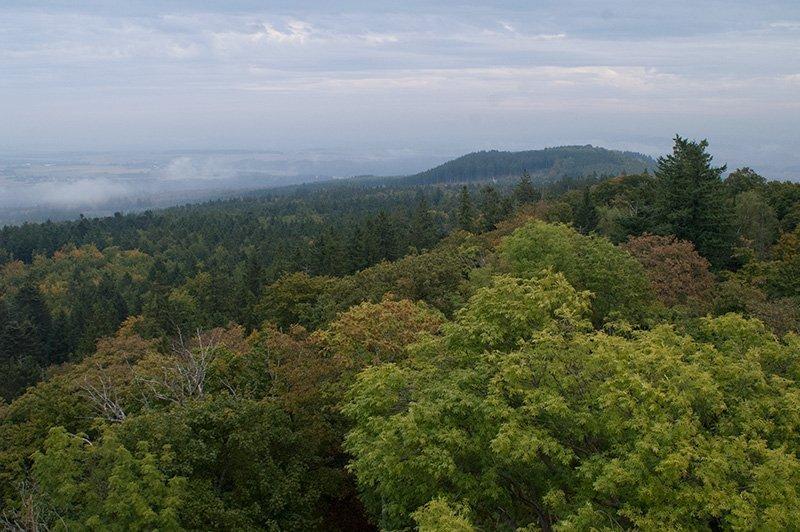 Höhenzug bedeckt mit Laubwald, Blick vom Wildenburger Kopf auf die Mörschieder Burr, den Schwesterberg des Wildenburger Kopfes