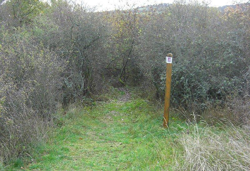 Ein schmaler Weg läuft auf eine Dornenhecke zu, ein schmaler Durchlass gewährt Zutritt