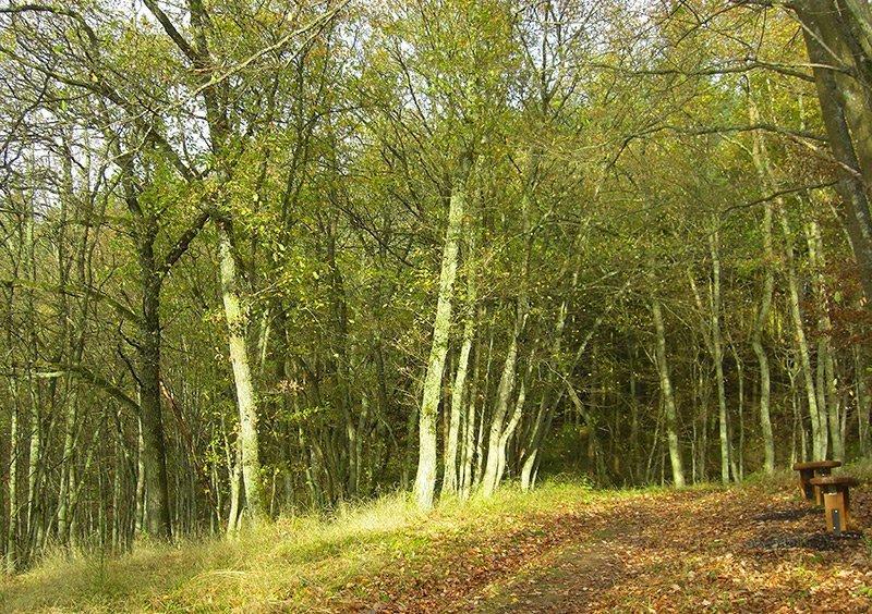 Herbstlicher Jungwald im zarten Licht der Novembersonne