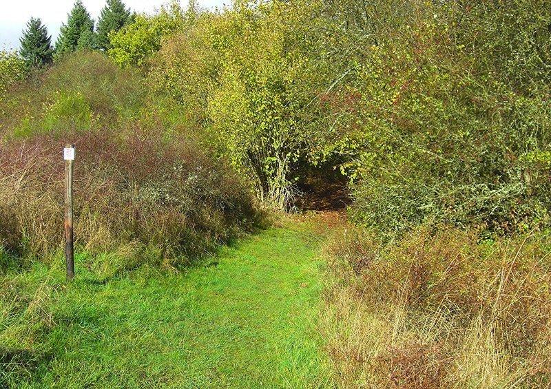 Ein grüner Wiesenpfad führt wieder hinein ins Gestrüpp