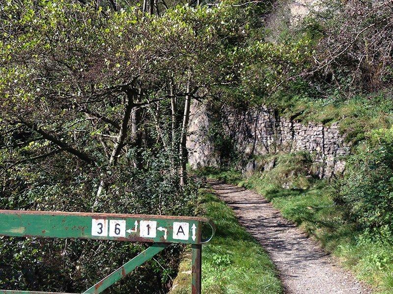 Ein schmaler Weg, der Ahrsteig, links ein grünes Geländer mit Richtungsweisern für verschiedene Wanderwege.