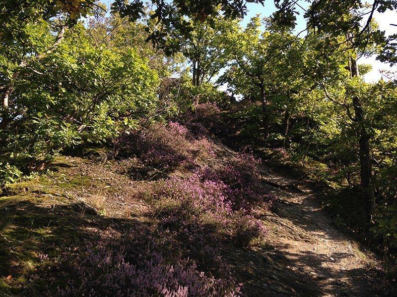 Niedrige Krüppeleichen, Heidekraut, junge Bäume im Sonnenlicht: Alles duftet wie in der Provence