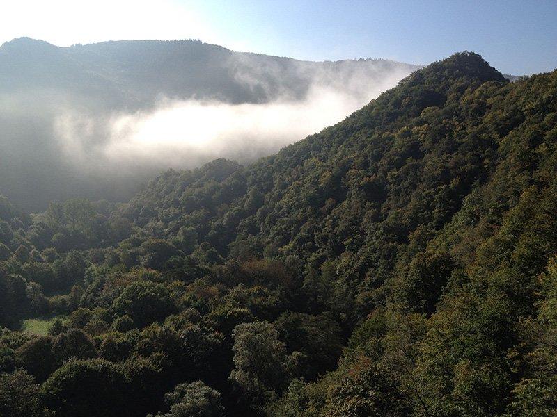 Ahrtal: Bewaldete grüne Hügel, darüber die Dunstschwaden eines frühen Sonnentages