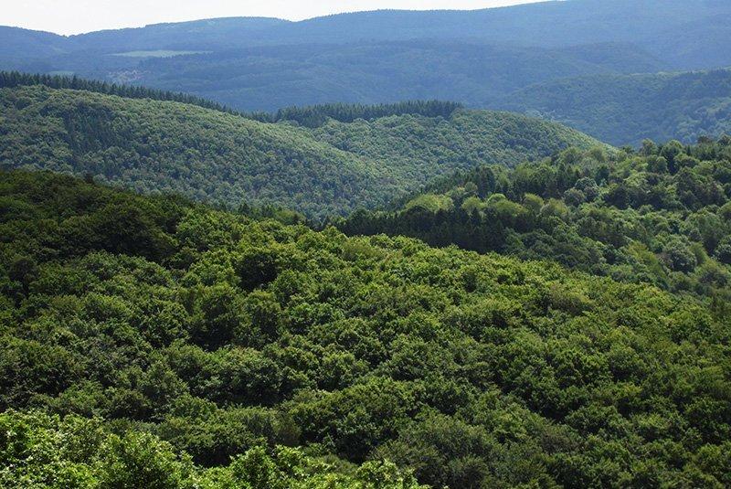 Ganz in Grün bestimmen die Hügel der Südeifel das Bild, das der Wanderer vom Steinerberg aus hat