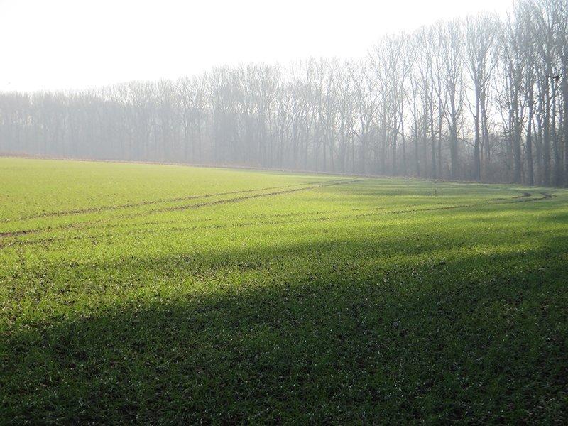 Ein Acker, Dunst über dem Grün, ein Waldrand